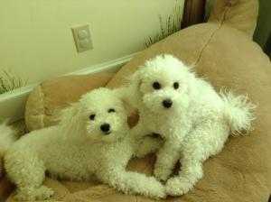 butler dogs