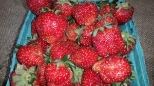 grainger strawberries